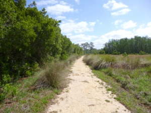 Disney Wilderness Preserve (61)