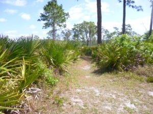 Disney Wilderness Preserve (63)