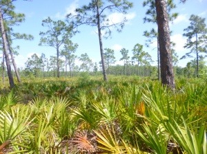 Disney Wilderness Preserve (66)