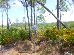 Disney Wilderness Preserve (67)