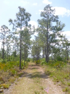 Disney Wilderness Preserve (68)
