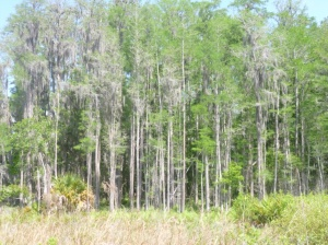 Disney Wilderness Preserve (73)