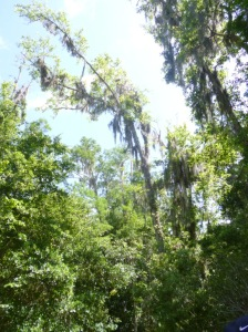 Disney Wilderness Preserve (78)