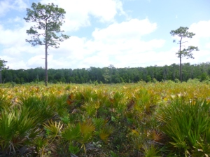 Disney Wilderness Preserve (88)