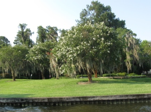 Sassagoula River (14)
